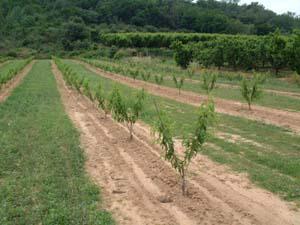 Plantation Emeraude
