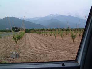 Plantation Gypse®