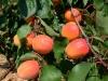 orangered-03-mr-toul-001