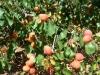 orangered-craux-005